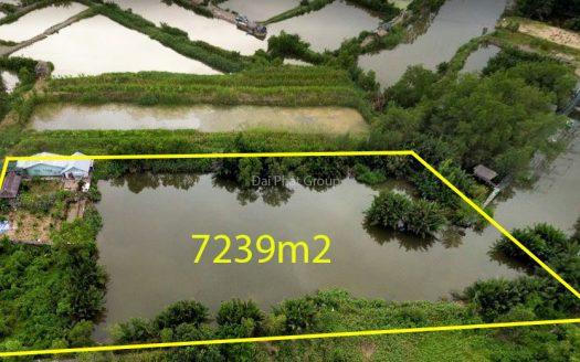 7239m2 đất nông nghiệp, Nhơn Đức, Nhà Bè